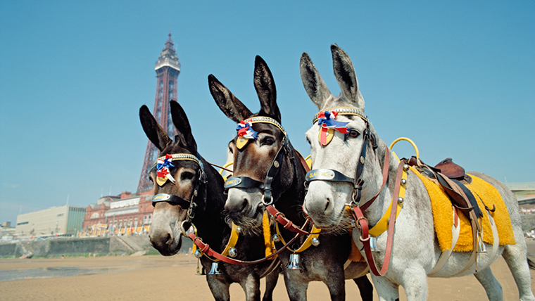 Three donkeys in Blackpool