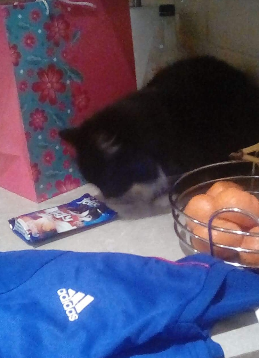 A cat sniffing a packet of cat food