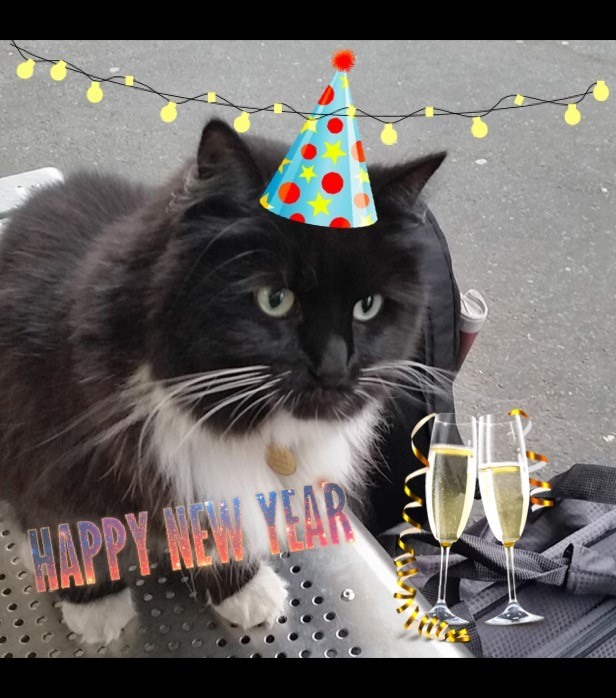 Felix the cat with a New years hat