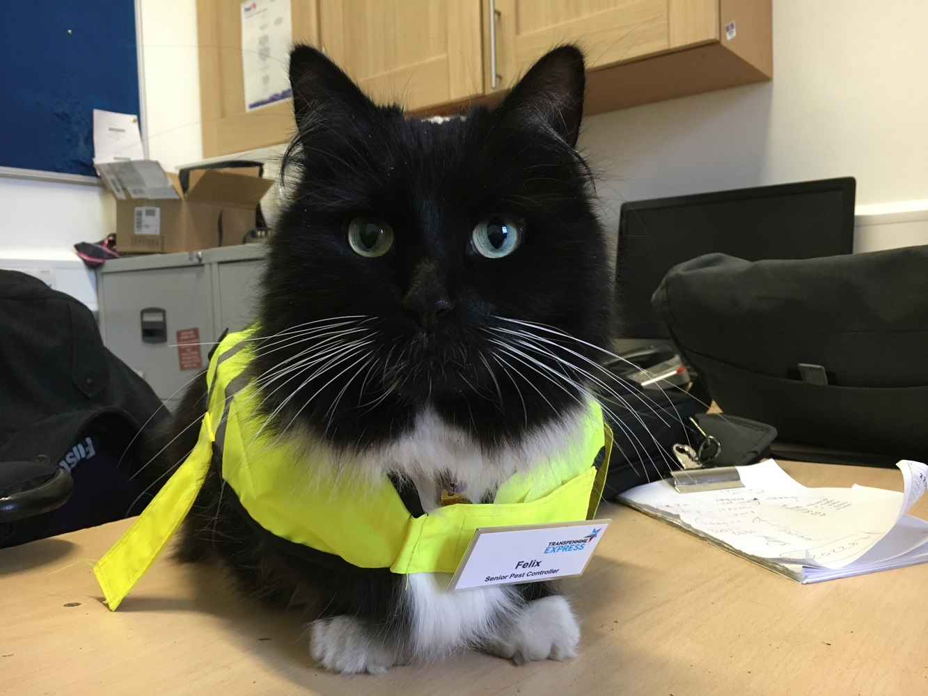 Felix the cat in a high-vis jacket
